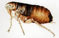 Articulo que ofrece consejos de como eliminar las pulgas y garrapatas