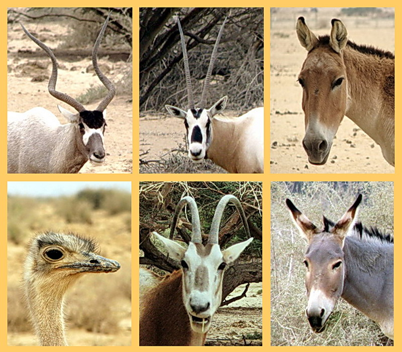 Plants And Animals That Live In The Desert | www.pixshark ...