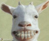 http://4.bp.blogspot.com/-V9VNUZrsDeg/TYzPwwmGW2I/AAAAAAAABfc/z8lPje9LJJo/s320/a%2Bfunny-goat-gif.jpg