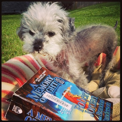 Murchie, a grey poodle with a fuzzy face and a sparsely furred torso, stands in a dog bed with pink, beige, and white striped sides. He is outdoors, with green grass visible in the background. In front of him is a paperback copy of A Memory of Light. Its cover features a man in a red coat. He brandishes a glowing crystal sword.