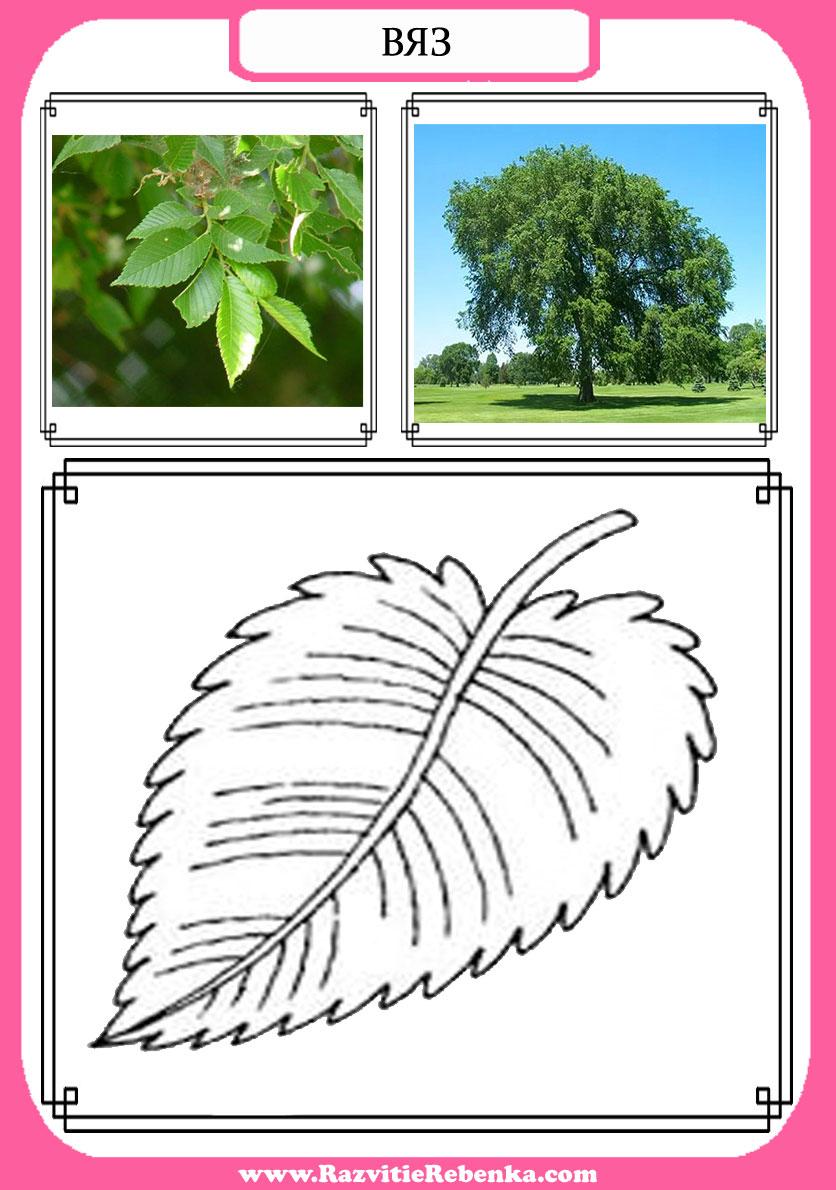 деревья картинки с названиями для детей