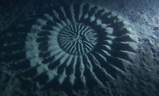 Crop Circle di Kedalaman Dasar Laut