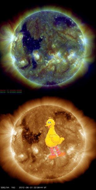 Big Bird Sun