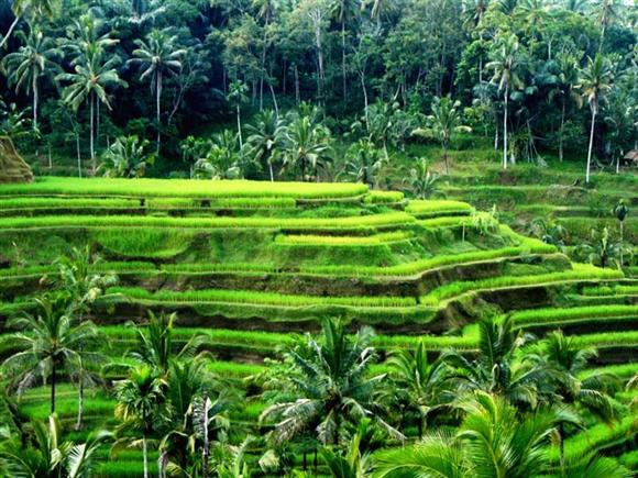 Bali things to do 50