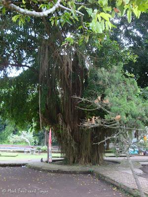 Ubud Monkey Forest Bali Photo 5
