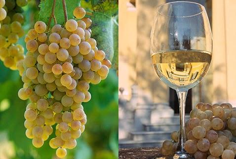 Пьемонте - регион виноделия