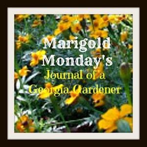 Marigold Mondays