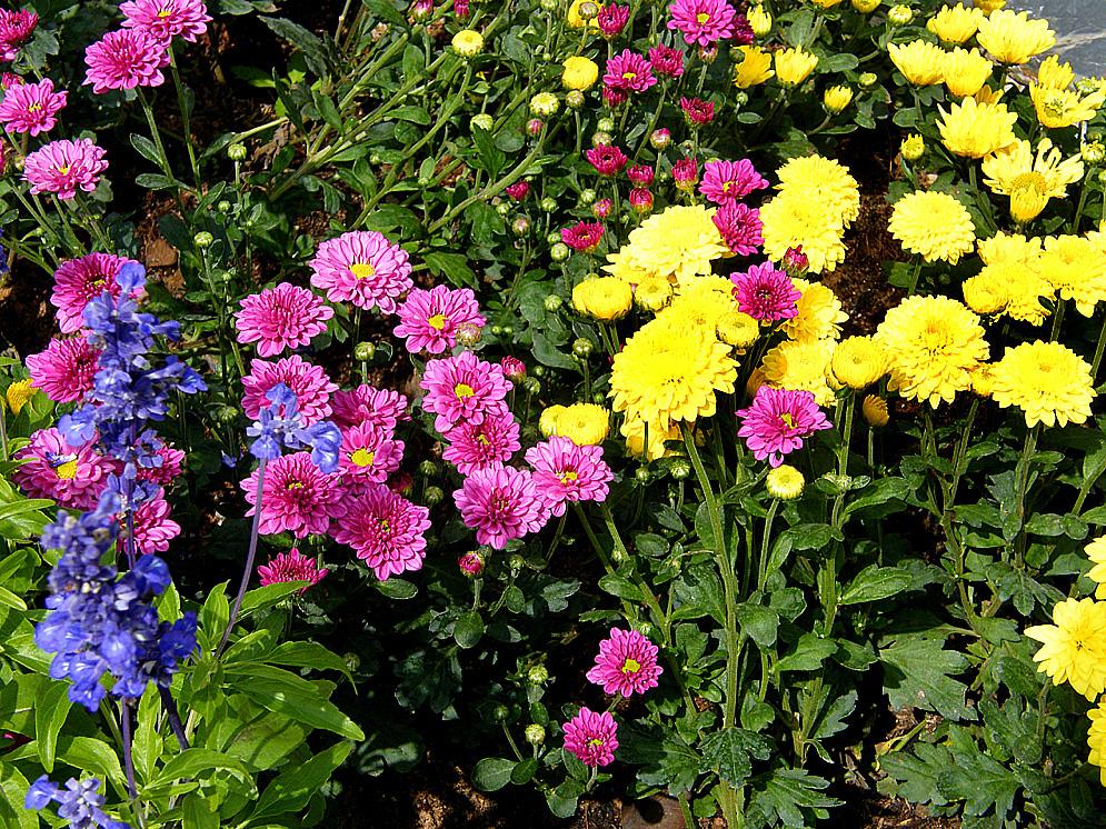 Immer Blühender Garten pakchong beobachtungen und erfahrungen garten