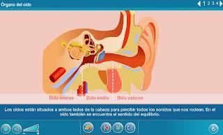 http://www.juntadeandalucia.es/averroes/carambolo/WEB%20JCLIC2/Agrega/Medio/El%20cuerpo%20humano/Los%20sentidos/contenido/cm008_oa02_es/index.html