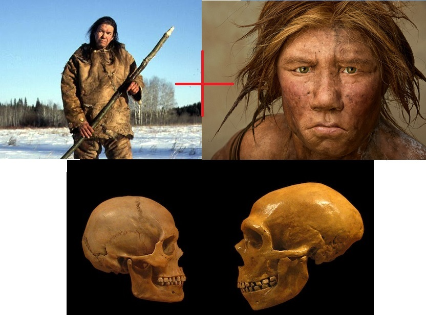 interbreeding between neanderthal and modern humans possible human skeletal remains of a hybrid foun The relationship between neanderthals and modern humans just  scientists  are certain that our modern human ancestors interbred  the new study  examined the skeletal remains of a man who lived about 40,000 years ago and  found that he'd had a neanderthal ancestor just a few generations back.