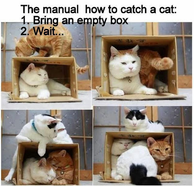 How to catch a cat. 1. Bring  an empty box. 2. Wait...