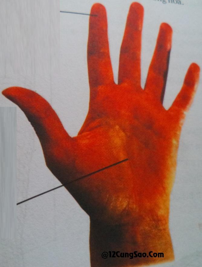 Bàn tay hình Thủy & xem tướng số của bàn tay này!