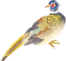 drawing image bird
