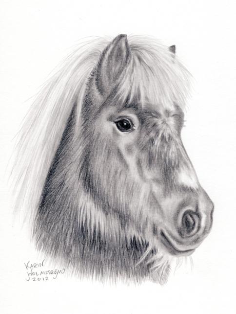 Hästporträtt i blyerts, shetlandsponny