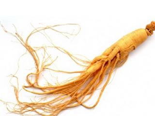 Manfaat Tanaman Obat Ginseng yang Membuat Tubuh Selalu Sehat