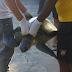 Tartaruga-de-pente ferida é resgatada no Canal Itajurú em Cabo Frio, no RJ