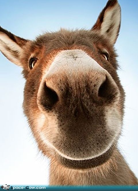 funny donkey faces - photo #21