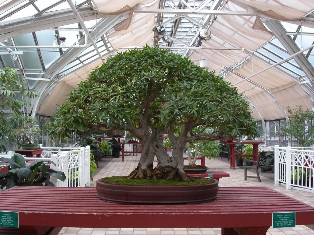 Remarkable Cool Bonsai Trees 1024 x 768 · 783 kB · jpeg
