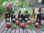 Rezension: Burkheimer Winzer- 4 Weißweine und 2 Rotweine