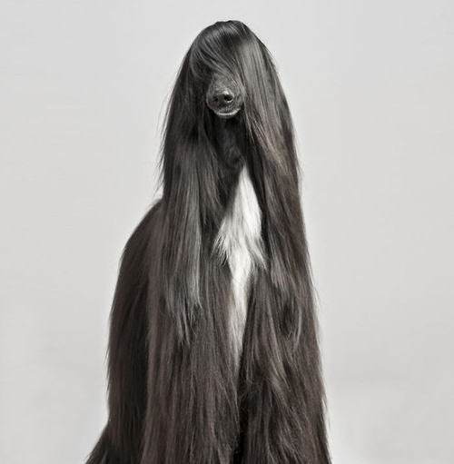 animales con un pelo maravilloso