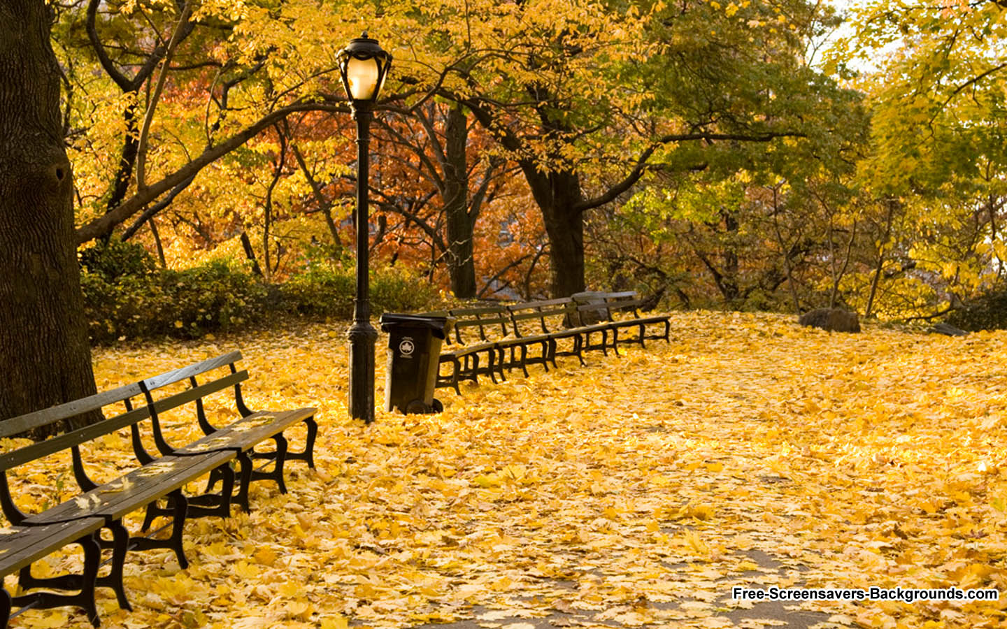 autumn in new york - photo #3