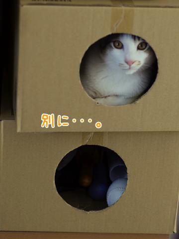 ダンボールの中の子猫