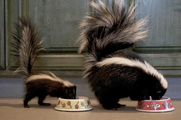 animal and their adorable mini-me 15