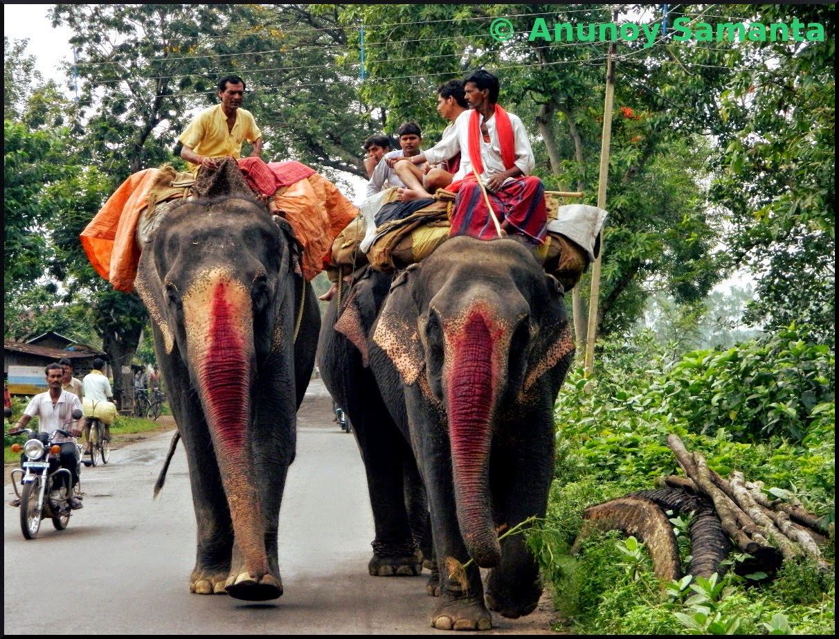 Elephants sharing the Highway