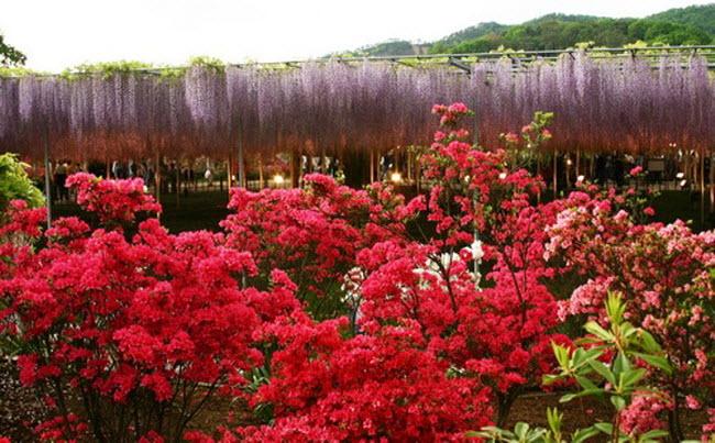شلالات الزهور اليابانية Water_Fall_Flowers_Japan_8.jpg