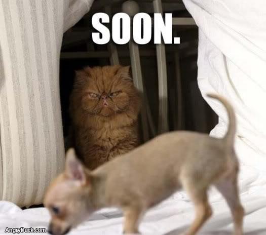 soon-dog-soon.jpg