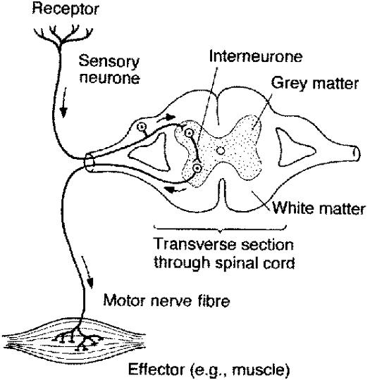 connor u0026 39 s biology blog  2 85