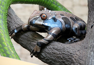Colorful Frog Inside MOLA
