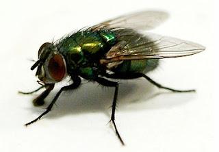 Kenapa Lalat Sulit Dipukul