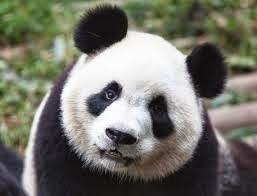 cara alami mengatasi mata panda