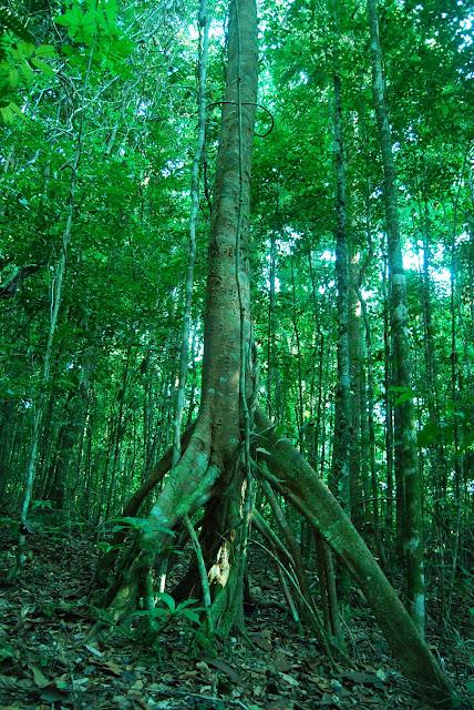 Джунгли Таиланда)