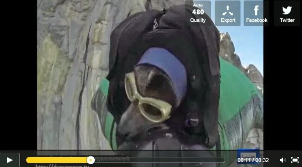 http://funkidos.com/videos-collection/amazing-videos/worlds-first-dog-wingsuit-base-jump