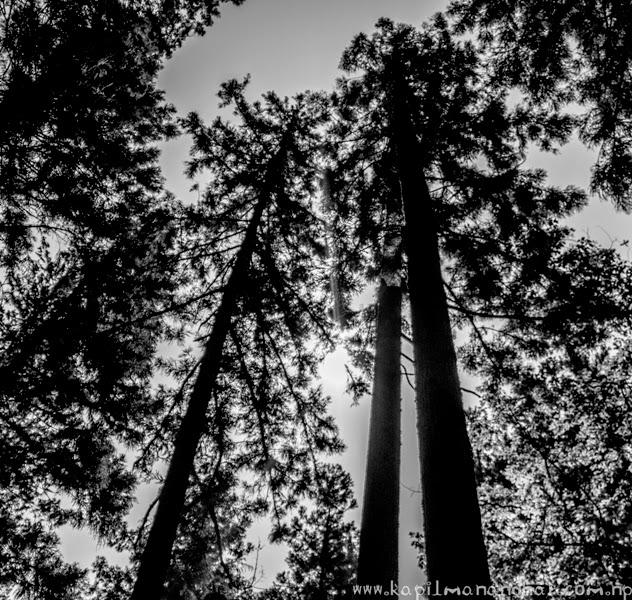 into the woods above in the sky,into the woods,forest