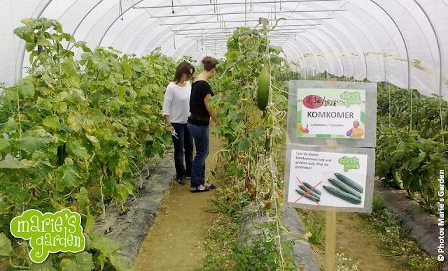 """Marie's Garden - Récolter des légumes et des fruits """"BIO"""" de ses propres mains aux portes de Bruxelles - Bruxelles-Bruxellons"""