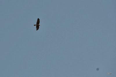 Raptor hovering above the Big Pivot