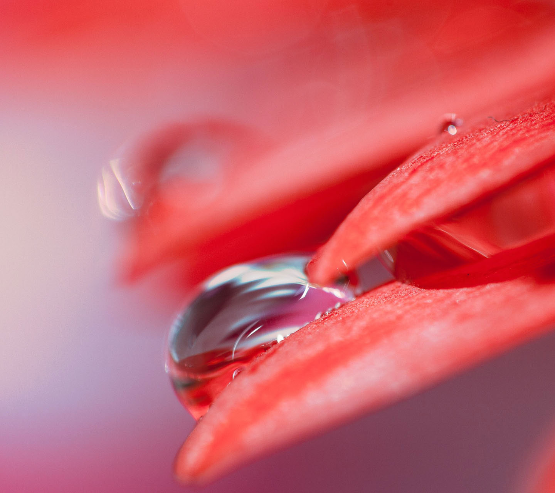 Galaxy S3 Wallpaper - Water Drop On Red Petal