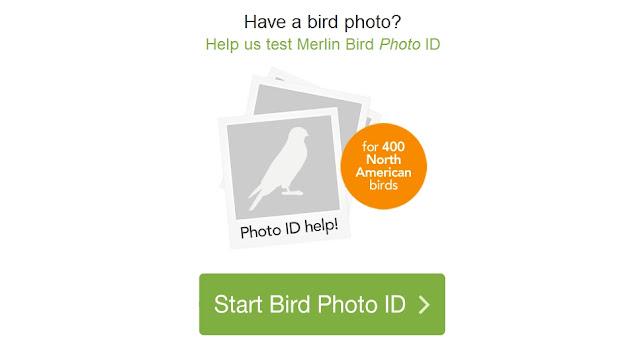 موقع ذكي يساعدك في في التعرف على الطيور انطلاقا من صورته