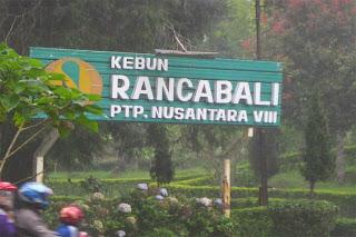 Perkebunan Teh Rancabali - Ciwidey