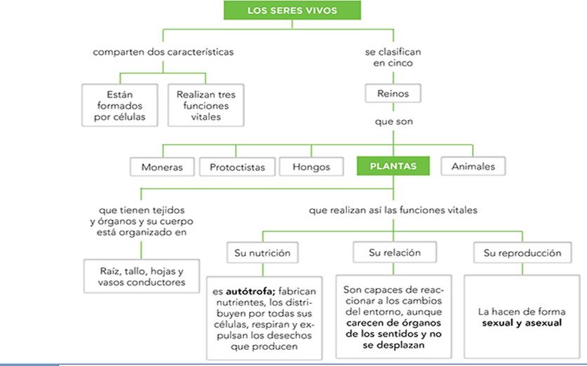 BLOG DE PAQUI SAFA ALMERÍA: CIENCIAS DE LA NATURALEZA: UDI 1 ...