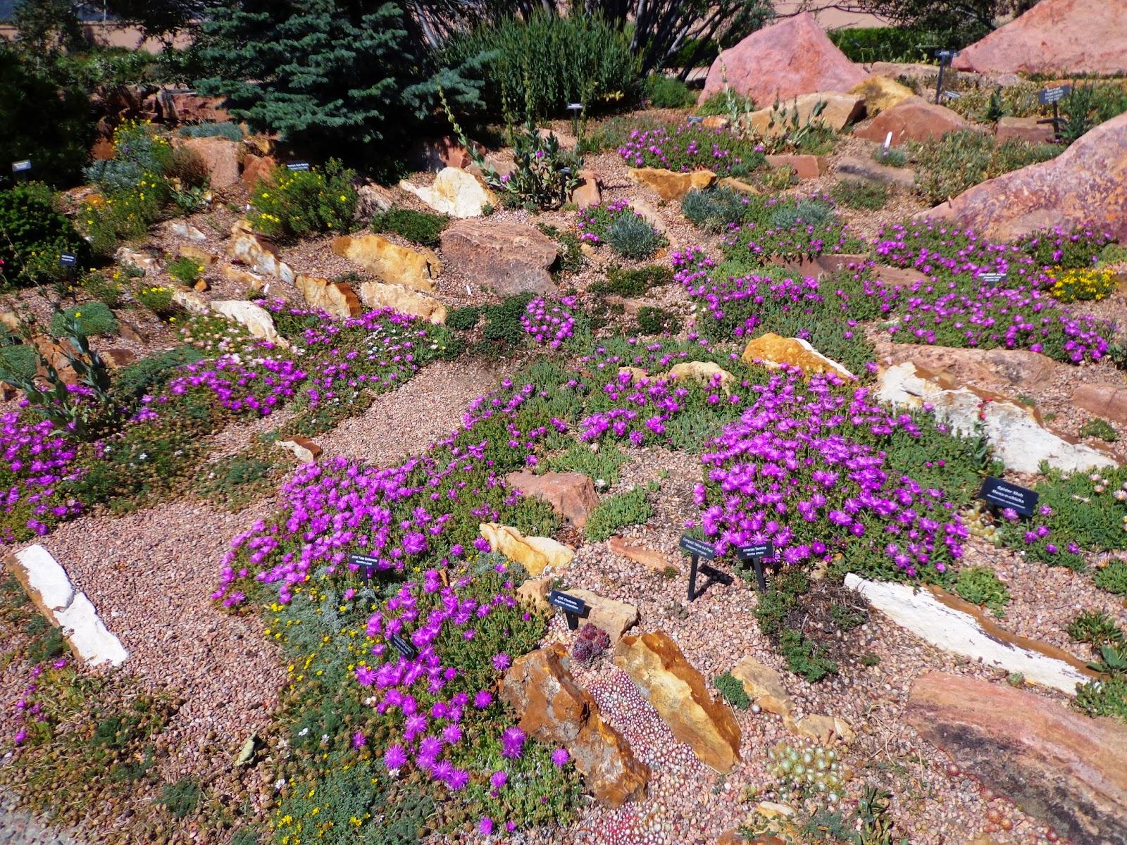 Xeriscape Garden Plants - Garden Ftempo