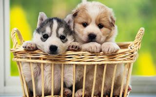 perritos tiernos