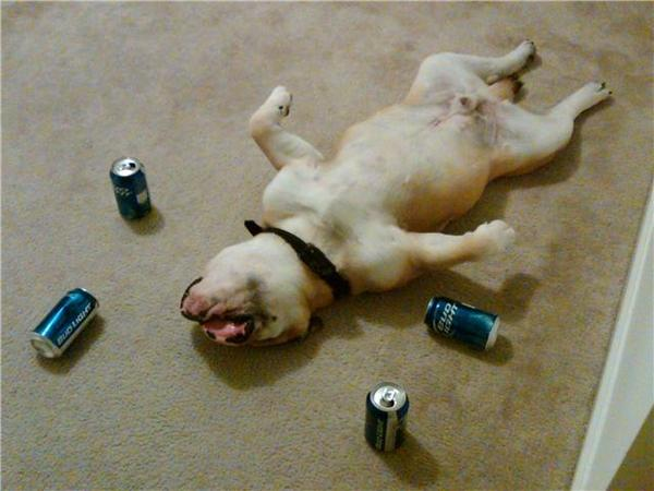[Image: Most+Funny+Drunk+Animals+%25285%2529.jpg]