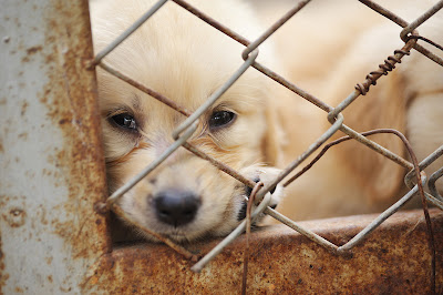 A sad puppy inside a rusty cage
