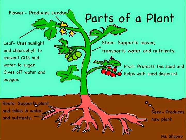Bbe 1st grade science lab gardening plant parts for Different parts of soil
