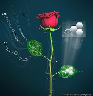 Mawar Cyborg ini Miliki Sirkuit Kabel Tumbuh Sendiri