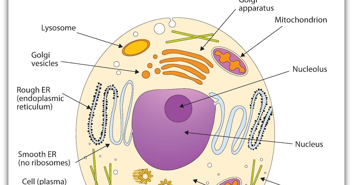 blogos metabolism vii controlBlogos Metabolism Vii Control #2